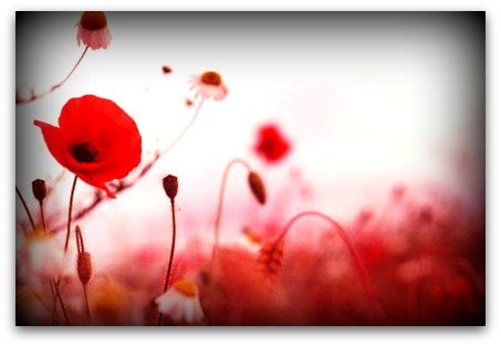 remembrance-day-November-2013